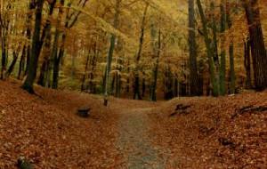 Gdańsk ratuje górskie lasy