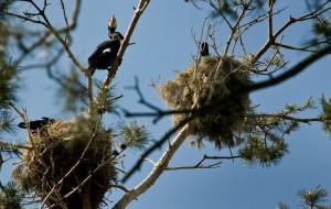 Na majówkę: wąskotorówka i kormorany