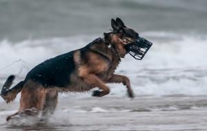 Gdzie żywot psa jest najmniej pieski?