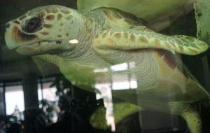 Żółw wraca do Gdyni, nowi lokatorzy gdańskiego ZOO