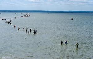 Śledzie na start - znowu idą piechotą przez zatokę