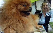 Ponad 800 psów na wystawie w Gdyni