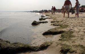 Wysypka i bąble po kąpieli w Bałtyku