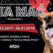 Psia mać / christmas edition