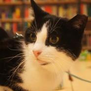 Kot w bibliotece