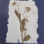 Papier czerpany - ukryta poezja