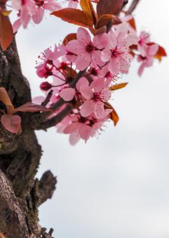 Rozwiń swoją karierę na wiosnę