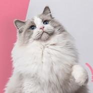 5. Pokaz kotów