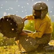 Kraina miodu | Prapremiera i spotkanie z pszczelarzem