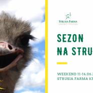 Sezon na Strusia - długi weekend na Strusiej Farmie w Kniewie
