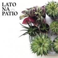Lato na Patio | Sąsiedzka wymiana roślin
