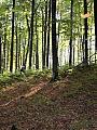 Samodzielne z mapą do lasu