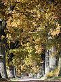 Drzewa - wrażliwe olbrzymy
