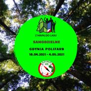 Samodzielne Z Mapą do Lasu Gdynia Polifarb