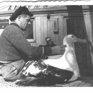 Zwierzęta i morze - wystawa w Klifie