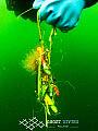 Sieci Widma - Wystawa Ghost Diving