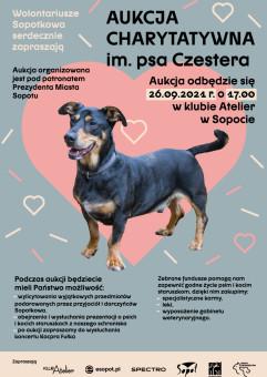 Aukcja Charytatywna im. psa Czestera