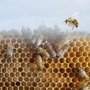 Co robią pszczoły na dachu Urzędu Miasta Gdyni?