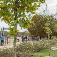 Gaje Matek i Ojców w gdańskich parkach
