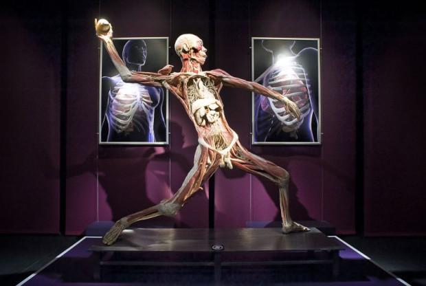 """Wystawa """"The Human Body"""" przedstawiająca m.in. wypreparowane ludzkie zwłoki zostanie otwarta w Gdańsku 2 maja."""