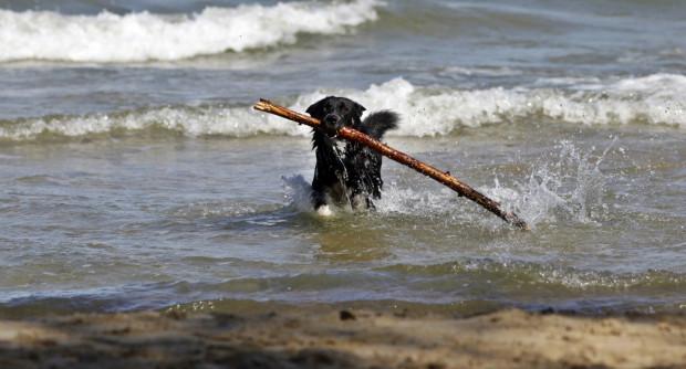 Plaża dla psów to propozycja dla tych, którzy latem lubią spacery z czworonogiem nad morzem.