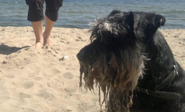 W Gdyni od ponad roku na plażę można wejść z psem, Sopot chcę pójść podobną drogą.