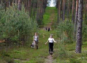 Dogtrekking to spacer lub bieg z psem na orientację.