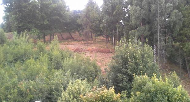 Drzewa przy ul. Bosmańskiej zniknęły zgodnie z prawem, ponieważ nie miały 10 lat.