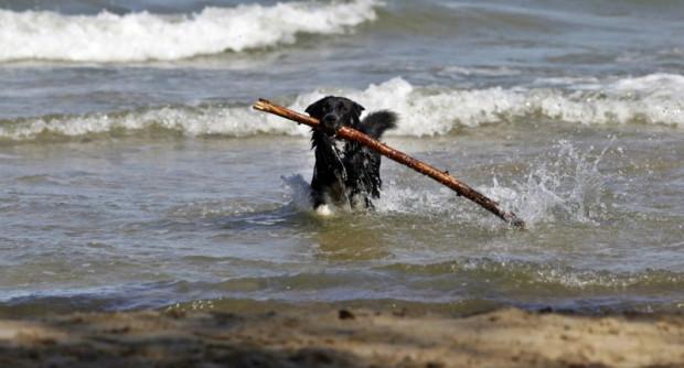W Trójmieście plaże (w specjalnie wyznaczonych miejscach) dostępne są w sezonie dla psów w Gdyni (przez całą dobę) i w Sopocie (tylko wieczorami).