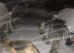 Nocne opady śniegu w Tokarach koło Gdyni.