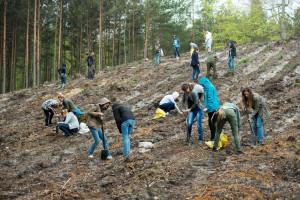 Studenci PG sadzą drzewa w lasach gdyńskich. Najbliższa akcja ogólnodostępnego sadzenia drzew odbędzie się 29 marca.