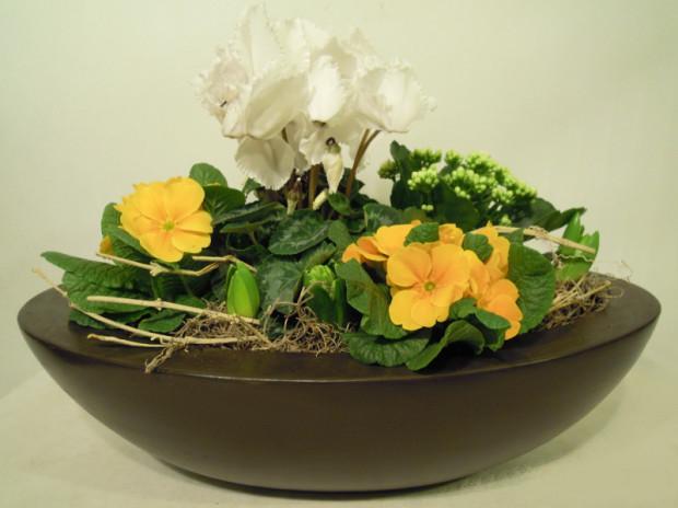 Mieszana kompozycja z kwiatów doniczkowych. Wystarczy elegancka misa, aby kwiatom zapewnić niezwykłą oprawę.