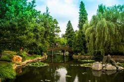Ogród japoński we Wrocławiu.