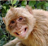 Według ewolucjonistów mamy więcej wspólnego z małpami niż nam się wydaje.