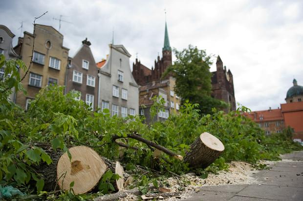 We wtorek wycięto drzewa przy ul. św Ducha w Gdańsku.
