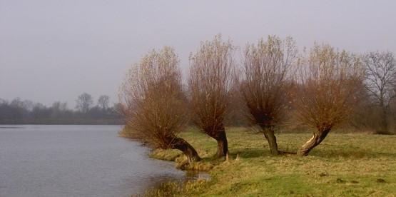 Typowy żuławski krajobraz z charakterystycznymi wierzbami