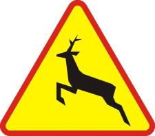 Znak A18-b ostrzega kierowców o możliwości występowania na drodze dzikich zwierząt.