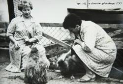 Młode kondory i ich opiekunki.