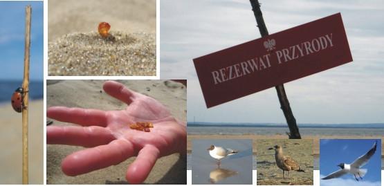 Migawki z plaży przy Rezerwacie Mewia Łacha