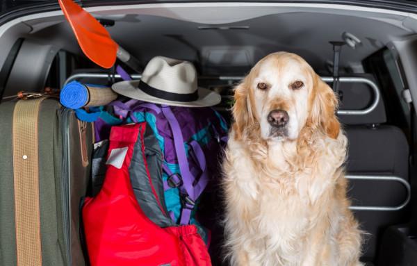 Zadbajmy o komfort podróży naszego zwierzęcia.