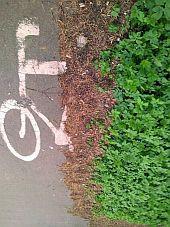 Zarośnięta ścieżka rowerowa na al. Hallera.