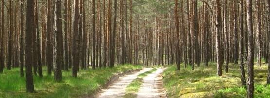 90% szlaków wiedzie drogami leśnymi, które niestety nie zawsze są przejezdne