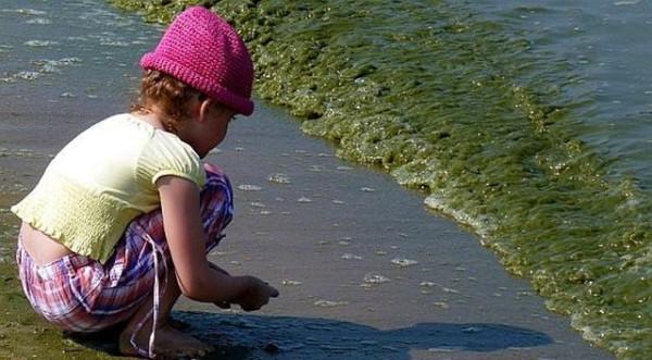 Kąpiel w morzu zanieczyszczonym sinicami grozi wieloma nieprzyjemnymi dolegliwościami, np.wysypką, bólem brzucha czy wymiotami.