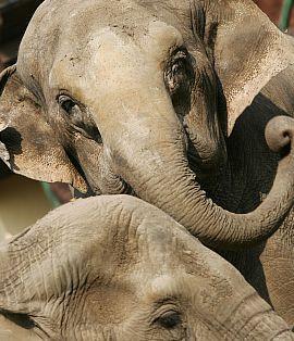 W sobotę będzie można usłyszeć m.in. dramatyczną historię o ucieczce przed słoniami