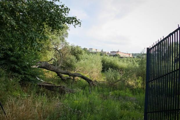 Zaniedbany staw browarny po odłączeniu zasilania wodami Potoku Strzyża. Zdjęcie z 2011 r.