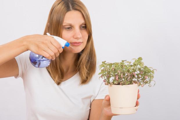 Wiele chorób roślin najskuteczniej wyleczymy opryskami. Do preparatu warto dodać np. szare mydło, które zwiększy przyczepność środka do liści.