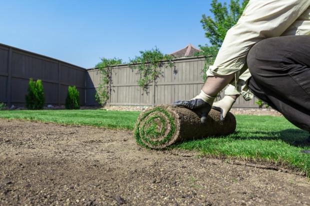 Zakładanie trawnika z rolki kosztuje około 25 zł za m kw., trawnika sianego około 8 zł za m kw. Mimo to ta pierwsza metoda jest coraz popularniejsza.