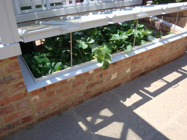 Jeśli nie mamy możliwości wybudowania szklarni, może zastąpić ją przeszklony od góry inspekt.