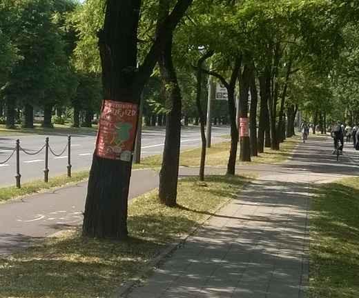Reklama Wielkiego Rowerowego Przejazdu na drzewach przy al. Zwycięstwa.