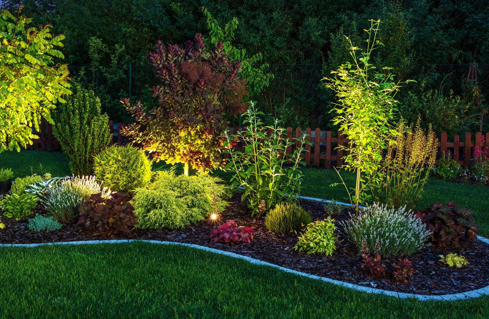 Ogrod Jakie Rosliny Posadzic W Cieniu